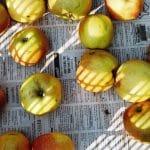 Szász Lilla: A mi házunk, Almák (2012) / Lilla Szász: Our House, Apples (2012)
